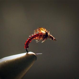 Jungle Mosquito